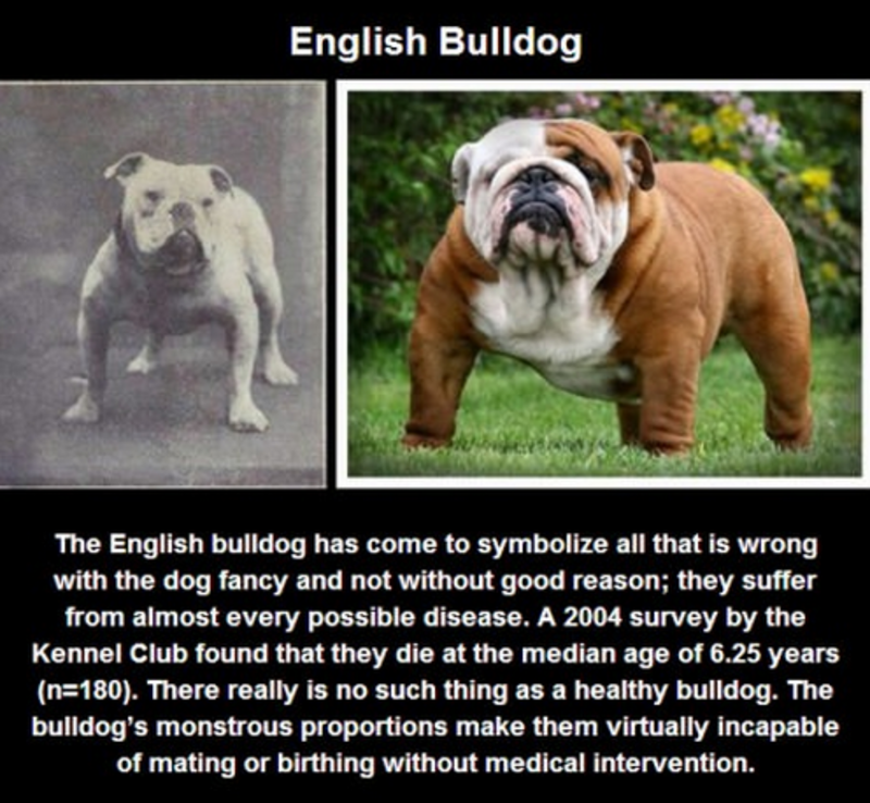 give one example of selective breeding