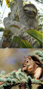 give an example of a habitat