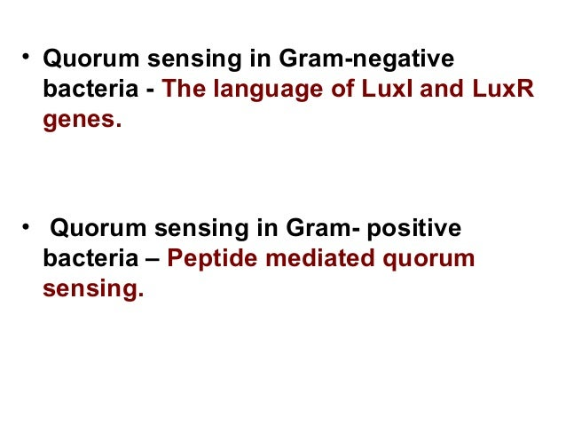 example of beneficial gram positive bacteria