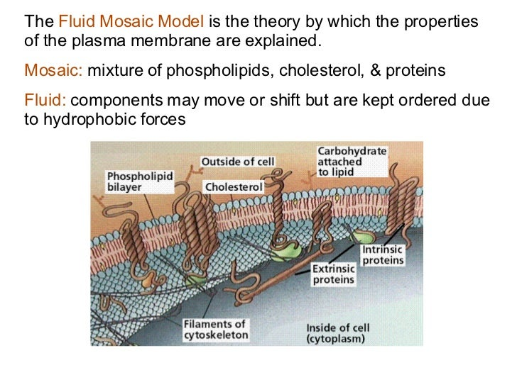 example of osmosis in human cells