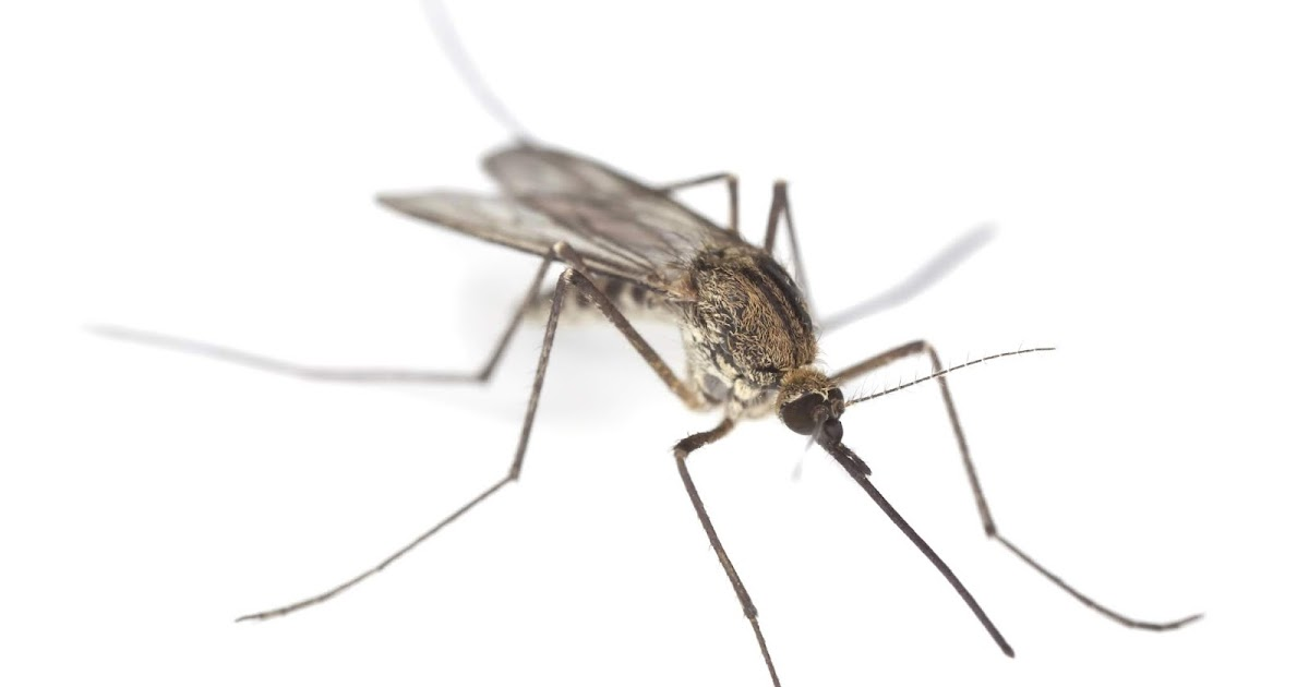 swatting a mosquito is an example of